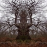 Cool Pictures - Gallery of Monster Trees
