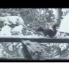 Funny Links -  Squirrel Launch