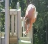 Funny Links - Backflips And Impales Nuts On Pole
