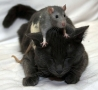 Funny Animals - Mouse Massage