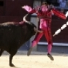 Funny Pictures - Bullfight Up in the Air