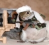 Funny Links - Commander Squirrel