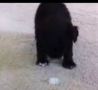 Funny Links - Puppy Plays with an Ice