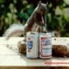 Funny Animals - Old Style vs Budweiser