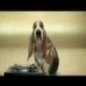 Funny Links - Basset Hound Beat Box