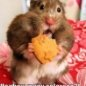 Funny Animals - Yum Yum Crackers