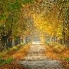 Cool Pictures - Roads