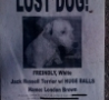 Funny Links - Lost Dog