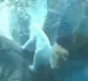 Funny Links - Polar Bear Takes a Dump