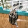 Funny Animals - Friendly Hamsters