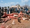 April Fools Pictures - What Happens When an Elephant Dies in Zimbabwe