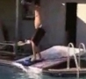 Funny Links - Guy Busts Mouth On Homemade Pool Slide