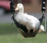 Funny Animals - Afflack Duck Spotted