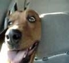 Funny Links - Laughing Dog
