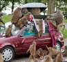 Funny Pictures - Baboon Attack