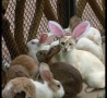 Easter Funny Pictures - Bunny Cat