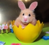 Easter Funny Pictures - Bunny In Disguise