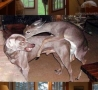 Funny Animals - Cheating Wife