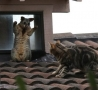 Funny Animals - Come Up Here Kitty!