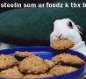 Easter Funny Pictures - Cookie Thief