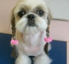Funny Animals - Cute Hairstyle For Dogs