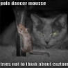 Funny Animals - Funny Mouse Pole Dancing