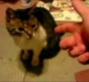 Funny Links -  Cat Plays Dead