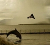 Funny Pictures - Dolphin Imitator