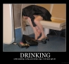 Funny Pictures - Drinking