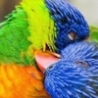 Funny Animals - Funny Pictures of Animal Couples