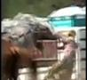 Funny Links - Horse Uppercuts Cowboy In Rodeo