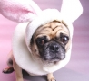 Easter Funny Pictures - Easter Bunny Dog