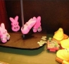 Easter Funny Pictures - Easter Mini Bunny Party