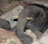 Funny Animals - Elephant in a Hole