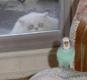 Funny Animals - I'll Be Watching You