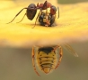 Cool Pictures - Insect Torture