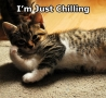 Funny Animals - Just Chilling
