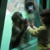 Funny Animals - Friendly Baboon 1