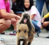 Funny Animals - Monkey Rider