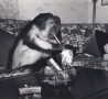 Funny Pictures - Monkey Sneaking a Smoke