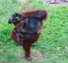 Funny Animals - Mothers Protection
