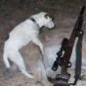 Funny Animals - Dog Stealing Your Thunder