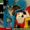 Funny Links - Real Crazy Cat Lady