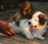 Funny Animals - No Touching The Dog, Sir.