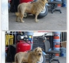 Funny Animals - Not a Lion