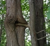 Funny Pictures - Perverted Tree