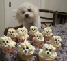 Funny Animals - Puppy Cupcake