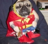 Funny Animals - Reluctant Hero