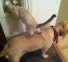 Funny Pictures - See What You're Pets Are Up To