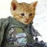 Funny Links - Cat Soldier
